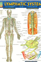 BC LYMPHATIC SYSTEM